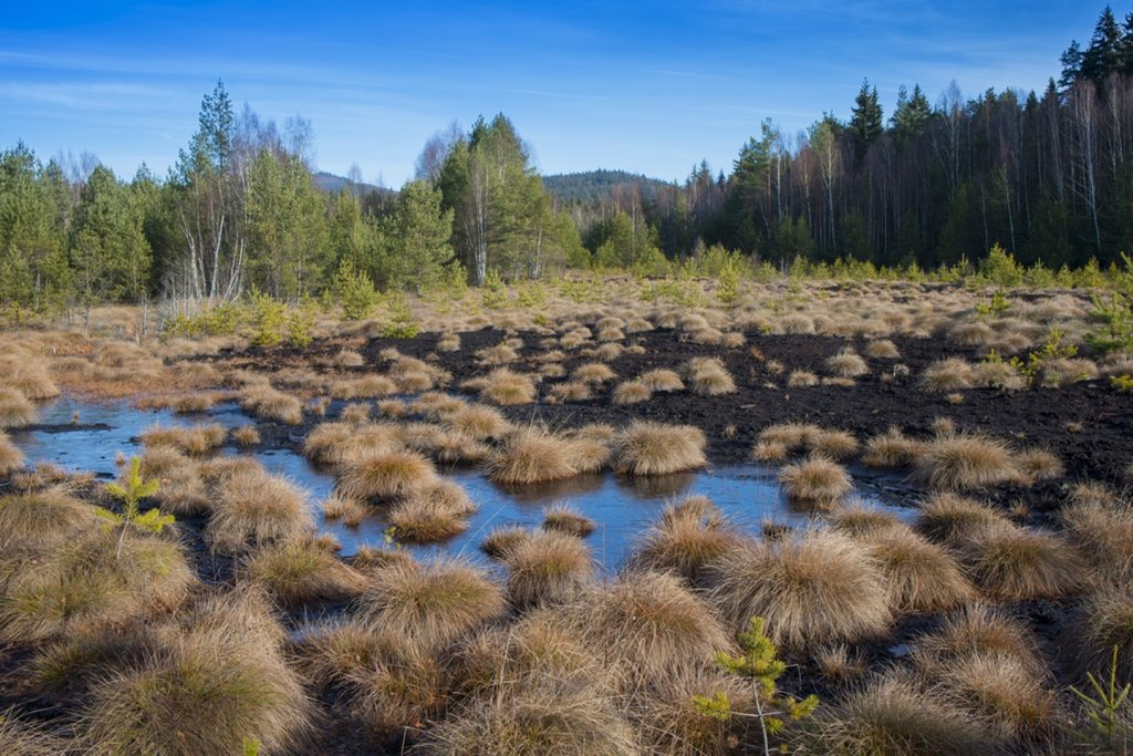 Image of Bog from Woolmer Forests Natural History